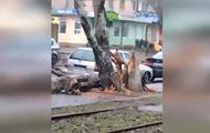 В Одессе ветер вызвал  деревопад