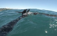 Акула напала на охотника и украла улов