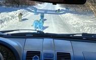 Возле химзавода заметили синих собак