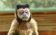 СМИ: В Индии обезьяны похитили двух младенцев и убили одного из них