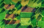 Ринок землі: 3% українців відразу продадуть свій пай