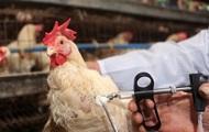 Выявлен первый случай заражения человека птичьим гриппом нового типа