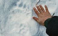 На Аляске медведь укусил местную жительницу за ягодицы