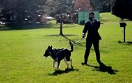Овчарка Байдена второй раз за месяц укусила человека — CNN