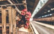 В Болгарии уничтожат тонны польского мяса