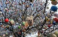 Вербна неділя в Україні розпочнеться із заморозків