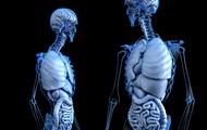 Виявлено механізм, що усуває старіючі клітини