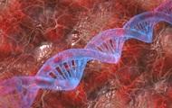 Человеческий геном полностью расшифровали