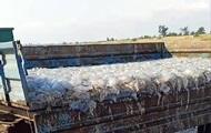 У Кирилівці мертвих медуз вивозять причепами