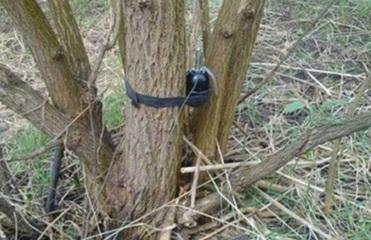В Луганской области пенсионер подорвался на растяжке