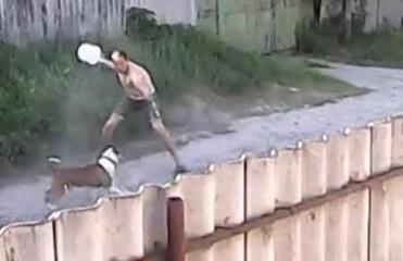 В Харьковской области питбули чуть не загрызли мужчину