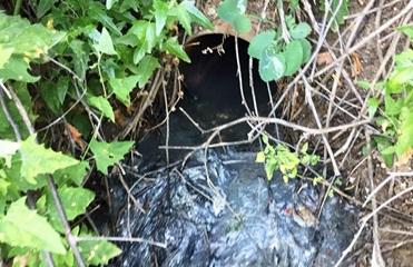 На курорте Кирилловка незаконный трубопровод сбрасывал нечистоты