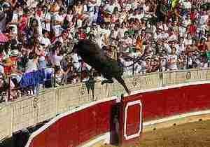 В Испании во время выступления рекортадоров вырвавшийся с арены бык ранил 30 человек