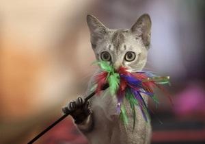 Сегодня отмечается Всемирный день кошек
