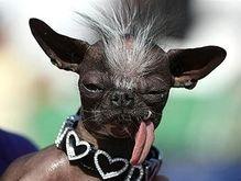 Стала известна самая уродливая собака в мире