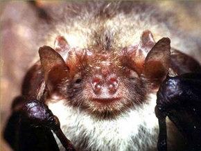 Ющенко одобрил защиту летучих мышей в Европе