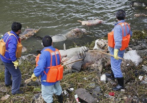 Новости Китая: В Шанхае из реки выловили более двух тысяч мертвых свиней