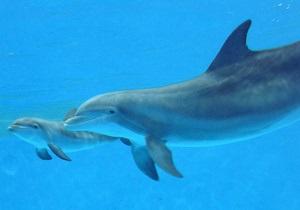 Дельфины помогли создать радар для обнаружения фугасов