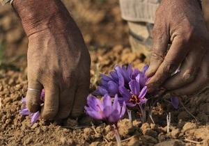 Пятая часть всех растений планеты находится на грани исчезновения