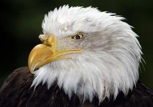 Американский ветеринар спас орлана, сделав ему искусственное дыхание