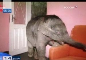 В одесской квартире поселился слон