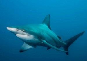 Ученые: Морские хищники охотятся по математическим законам