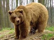 По Нижнему Новгороду несколько часов гулял медведь из зоопарка