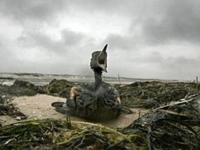 Крымские экологи: Черное море может стать самым грязным в мире