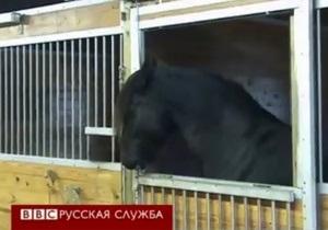 Хит YouTube: лошадь  Гудини  сбегает из загона