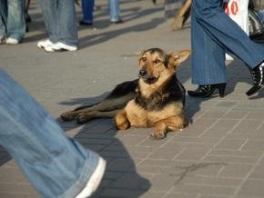 В Киеве посчитали бездомных животных