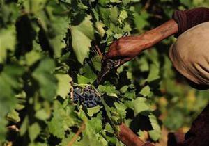Wikileaks: Армения завышает урожай винограда, чтобы скрыть незаконное производство коньяка