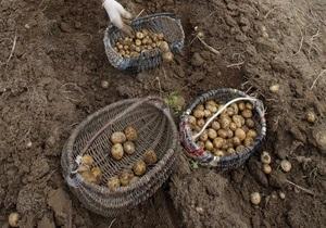 Украина в этом году соберет около 23 млн тонн картофеля
