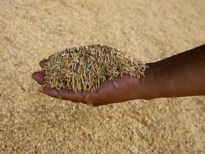 Путин создал компанию по экспорту зерна из России