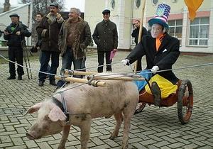 В Симферополе покатали в свиной упряжке чучело Ющенко