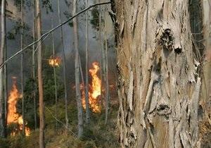 В этом году в лесных пожарах в Италии погибли 14 миллионов животных