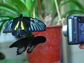 В Киеве проходит выставка экзотических бабочек