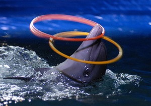 СЭС подтвердила нарушения в работе киевского дельфинария