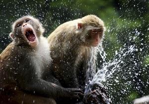 В Борисполе задержали сирийца при попытке ввезти в Украину партию экзотических обезьян