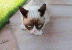О популярном в интернете хмуром коте снимут фильм