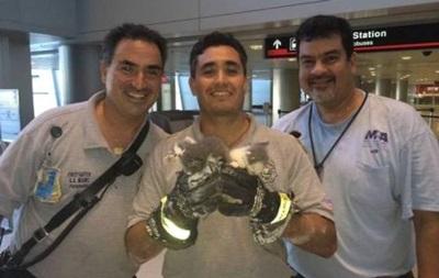 В аэропорту Майами провели спасательную операцию по освобождению котят из потолка