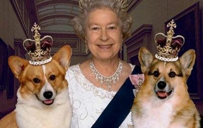 Пресса Британии: королевские корги на грани вымирания?