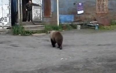 На Камчатке впервые объявили комендантский час из-за медведей