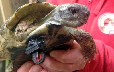 Черепахе без лапы сделали протез из Lego