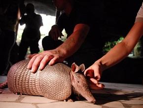 В Киевском зоопарке впервые отпраздновали День броненосца