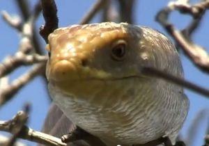 Жители Керчи сообщают о нашествии змей