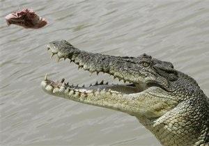 В киевском зоопарке умер крокодил