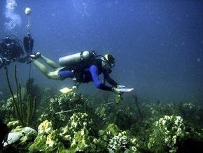 Плоские кораллы убили традиционные карибские рифы
