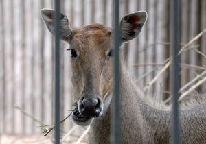 Киевский зоопарк переносить не будут - Попов