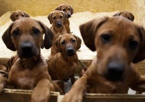В Донецке начала работать первая в стране скорая помощь для бездомных животных