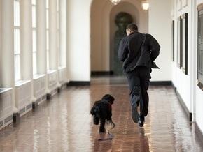 Фотогалерея: Обама и его маленький Бо